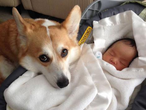 Perro cuidando a un bebé que está durmiendo